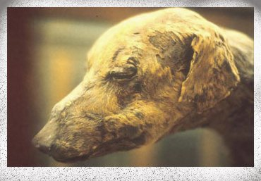 A Mummified Dog from Ancient Egypt.