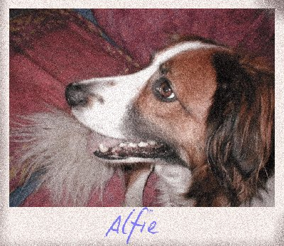 Inspire Your Dog Border Collie Working Sheepdog Sheep Dog Training Help Advice Behavioural Health Alfie Red and white