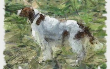 Inspire Your Dog Remy Red Dog Red and White Setter Training Help Advice Behaviour Health Food Hungry