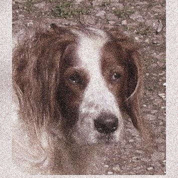 Inspire Your Dog Remy Red Dod Red and White Setter