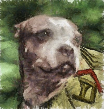 Inspire Your Dog Dogs In Wartime History Navy Army RAF Hero Heroic Just Nuisance Dog Sergeant Sgt Stubby