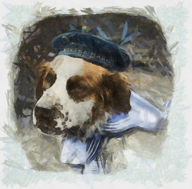 Inspire Your Dog Dogs In Wartime History Navy Army RAF Hero Heroic Bamse St Saint Bernard