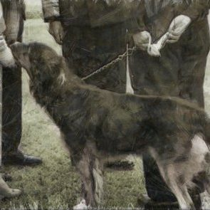 Inspire Your Dog Dogs In Wartime History Navy Army RAF Hero Heroic Just Peter The Collie