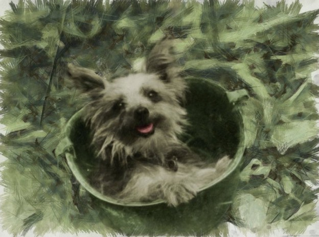 Inspire Your Dog Dogs In Wartime History Navy Army RAF Hero Heroic Just Nuisance Dog Smoky Angel In A Foxhole