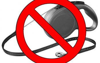 Say No To Retractable Leads Inspire Your Dog